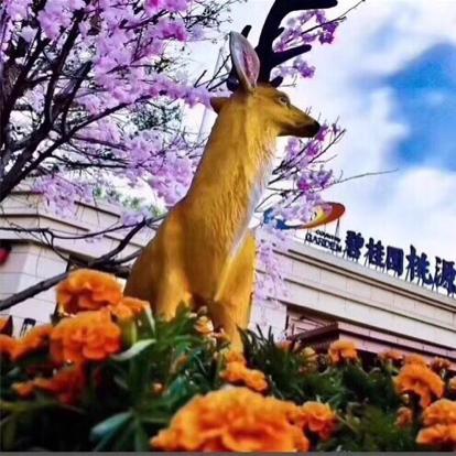 碧桂园桃源里直播封面