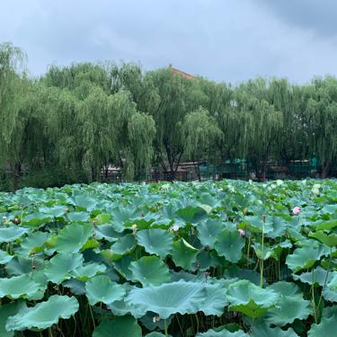 潮白河孔雀城雅瑞园直播封面