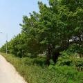 防城港阳光海岸