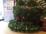 东岳广场资讯配图
