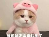 兰亭都荟资讯配图