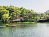 绿城合景·春来晓园资讯配图