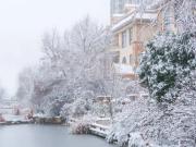 濮阳首场大雪,什么地方这么美?