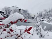 【北海锦华】煮雪问茶味,当风看雁行
