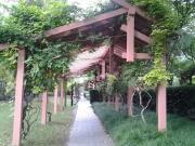 【居行】浦东又一特色公园将建二期,总用地面积21429㎡