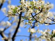 云上的春日好光景  繁华公园畔 盛放浓荫园境