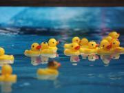 小黄鸭水上乐园来袭,萌力全开,男宝女宝来冲鸭!
