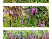 广汉楼盘景观中的战斗机:数万元一棵的树、超100种花!(认全