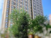 哈尔滨两大新区四大楼盘最新工程进度曝光 单价低至13000元