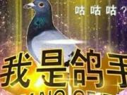"""曝光!谁是""""鸽""""王?""""鸽手""""之一的金沙湾即将开盘?"""