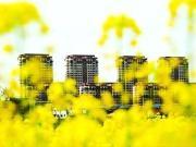 开盘预告:广州楼市小阳春?不存在的!