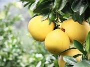 @郑州所有人  远洋风景柚子全城大派送甜蜜来袭  速来围观!