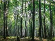 城市里的绿色奢侈品,还原森林之美