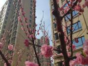 金居东城新天地:二期绿化竣工|门前湖畔草长莺飞,待您提前收房