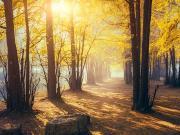 龙盛乾园 | 看得见美妙风景,容得下慢调情怀