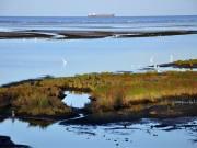 北戴河国家湿地公园接受专项检查 推动公园建设管理工作