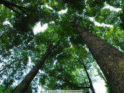 郑州昌建誉峰|60年的参天大树,你在小区里见过吗?