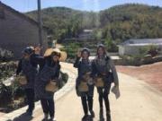 儒林境社群活动 采茶制茶嗨玩大别山