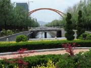 天东河河道两岸打造生态林带 计划9月底完工