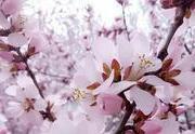 包头没有海 但有春暖花开