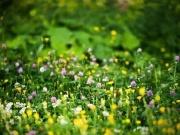 德馨佳苑丨春来,一城山色